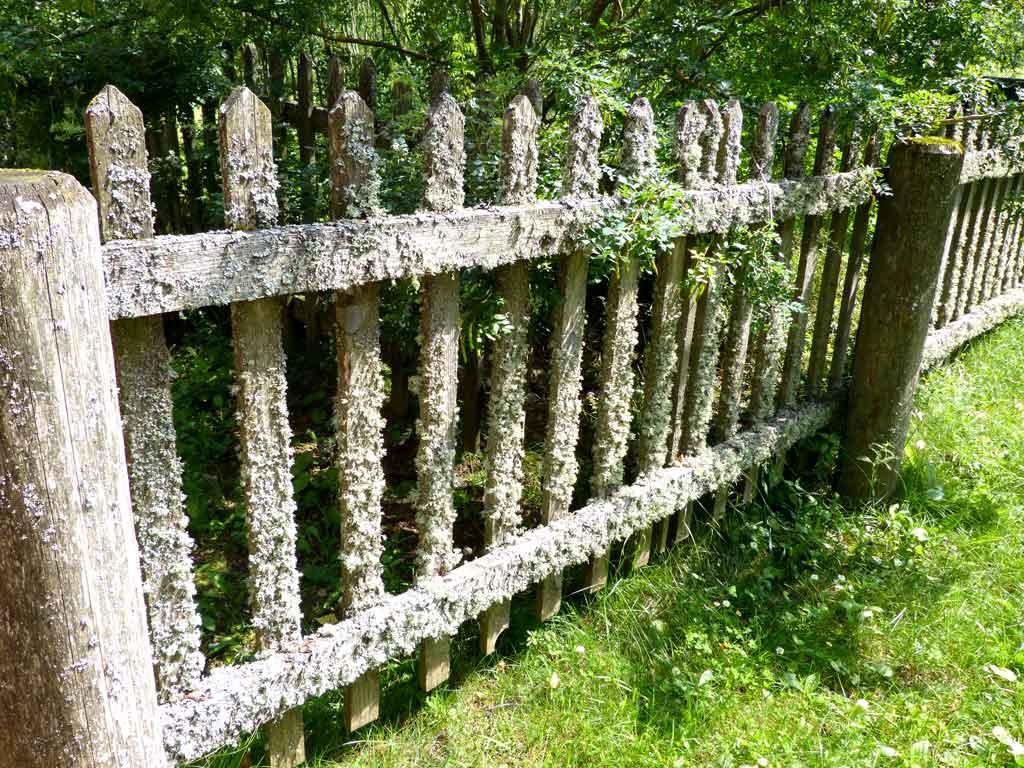 Забор, поросший мхом