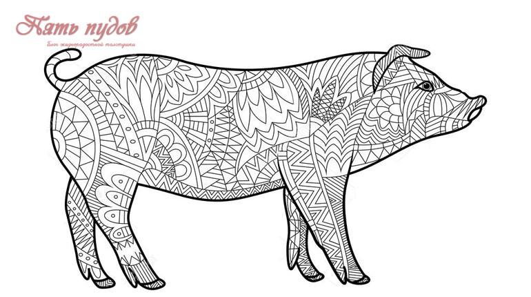 раскраска свинка 2019